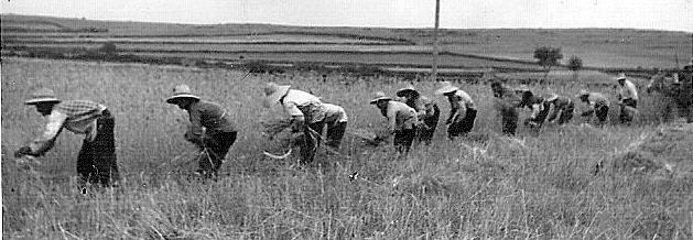 Futuro, Agricultura, 2035