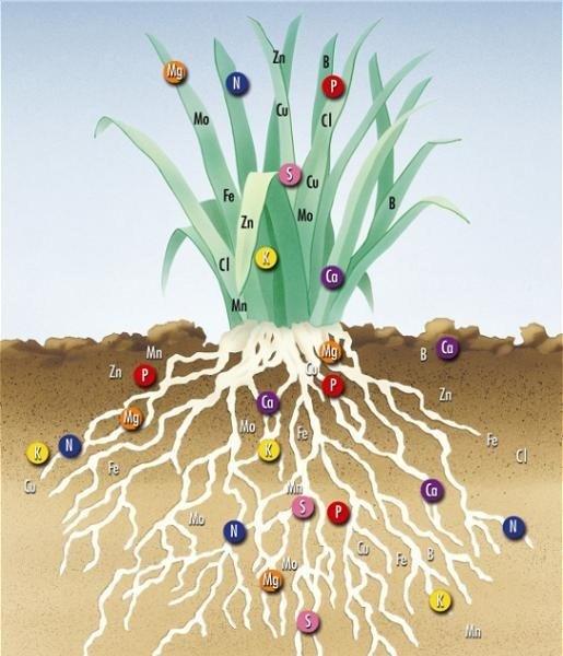 Buscando la autosuficiencia en fertilizantes
