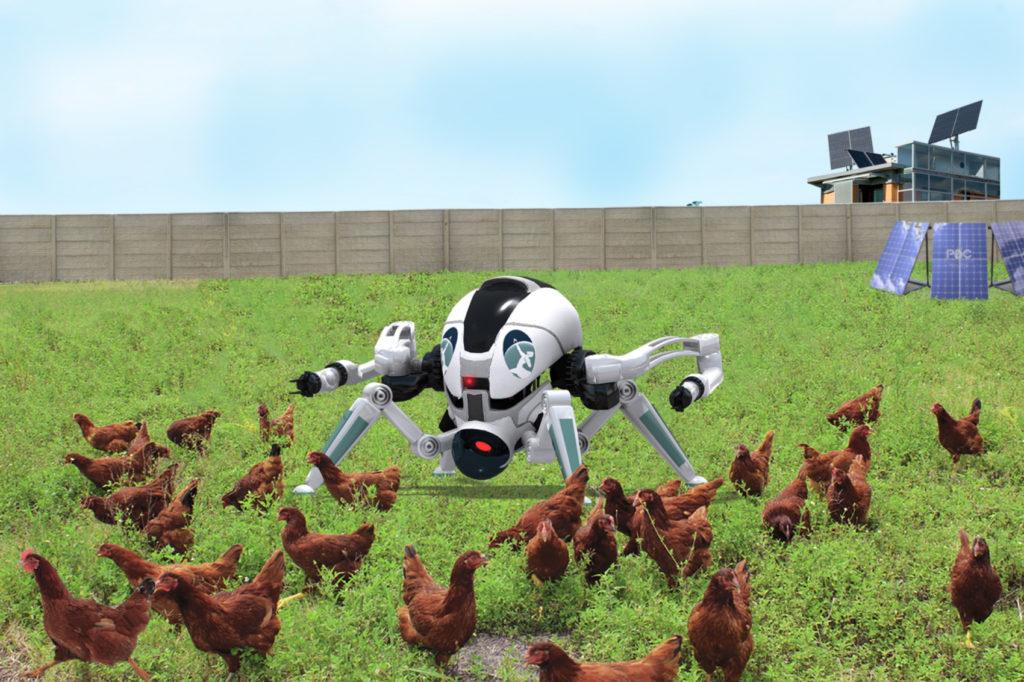 Robot-gallinas